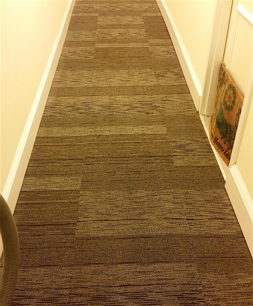 Philadelphia Apartment Carpet Cleaning Gentle Clean
