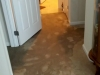 Carpet Flood - 2