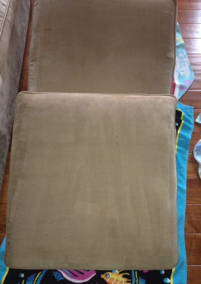 Dangers Of Lingering Couch Stains Gentle Clean Carpet Care
