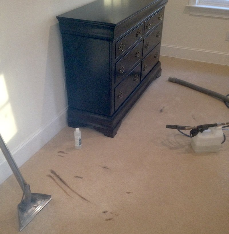 Gentle Clean repairs a carpet stain in Blue Bell