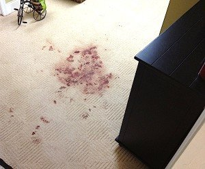 This carpet pet stain was repaired by Gentle Clean Carpet Care
