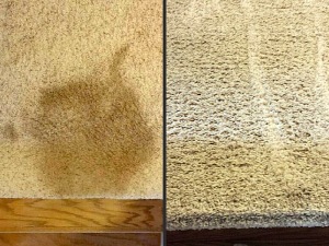 Cleaning Pet Vomit from Carpet